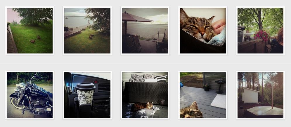 cats-crop