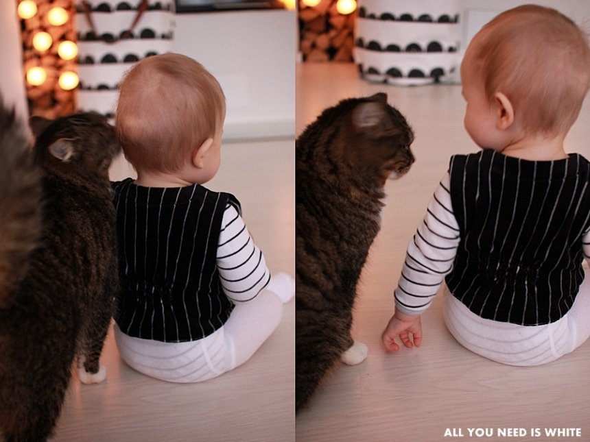 cats7-860x645